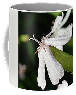 White Campion 2 Coffee Mug