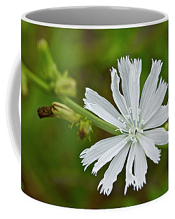 White Chicory  Rare Color Phase   Cichorium Intybus Coffee Mug
