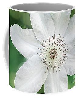 White Clematis Flower Garden 50121 Coffee Mug