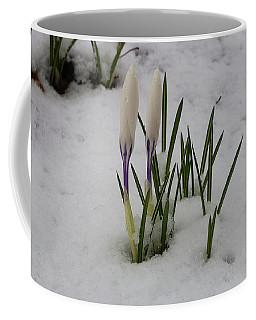 White Crocus In Snow Coffee Mug