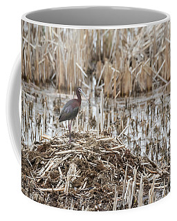 White-faced Ibis 2017-1 Coffee Mug