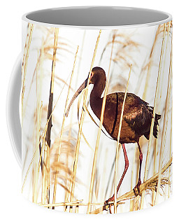 Coffee Mug featuring the photograph White Faced Ibis In Reeds by Robert Frederick