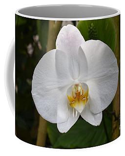 Phalaenopsis Sanderiana Coffee Mug