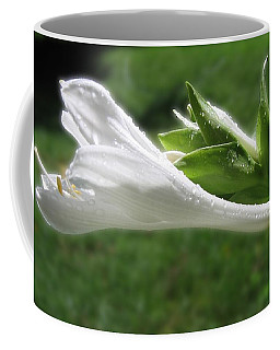White Hosta Flower 46 Coffee Mug by Maciek Froncisz
