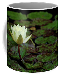 White Lily In The Pond Coffee Mug