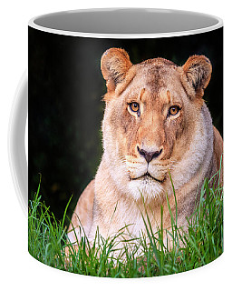 Coffee Mug featuring the photograph White Lion by Alexey Stiop
