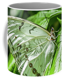 Coffee Mug featuring the photograph White Morpho Butterfly by Joann Copeland-Paul