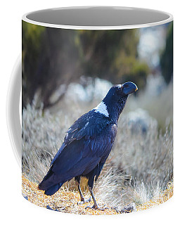 Coffee Mug featuring the photograph White-necked Raven Camping Out On Kilimanjaro by Jeff at JSJ Photography