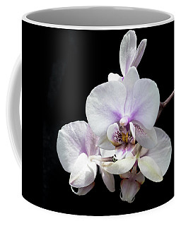 Coffee Mug featuring the photograph White On Black by Cathy Donohoue