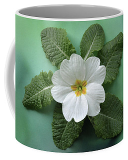 Coffee Mug featuring the photograph White Primrose by Terence Davis