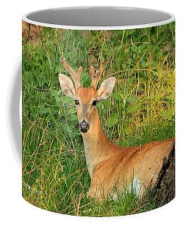 White-tail Buck Resting Coffee Mug