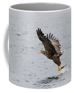 White-tailed Eagle Catching Dinner Coffee Mug