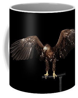 White-tailed Eagle Coffee Mug