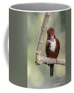 White-throated Kingfisher 01 Coffee Mug