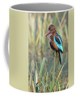 White-throated Kingfisher 13 Coffee Mug