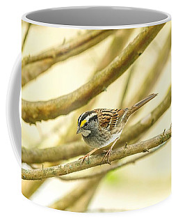 White Throated Sparrow Coffee Mug