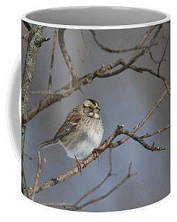 White-throated Sparrow Coffee Mug by Living Color Photography Lorraine Lynch