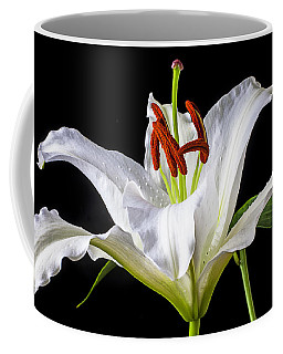 White Tiger Lily Still Life Coffee Mug
