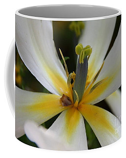 Coffee Mug featuring the photograph White Tulip by Jolanta Anna Karolska