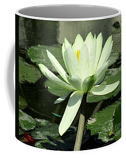 Coffee Mug featuring the photograph White Water Lily 1 by Randall Weidner