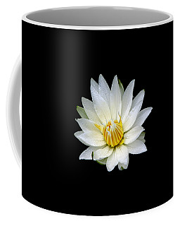 Coffee Mug featuring the photograph White Waterlily With Dewdrops by Rose Santuci-Sofranko