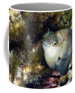 Whiteband Damsel Macro Photography Coffee Mug