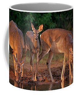 Coffee Mug featuring the photograph Whitetail Deer At Waterhole Texas by Dave Welling