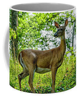 Coffee Mug featuring the photograph Whitetail Deer  by Thomas R Fletcher