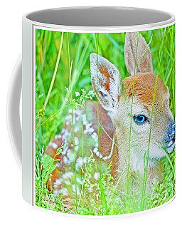 Whitetailed Deer Fawn Coffee Mug