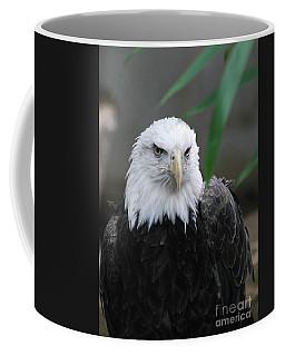 Wild Bald Eagle Bird Coffee Mug by DejaVu Designs