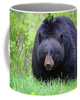 Wild Black Bear Coffee Mug