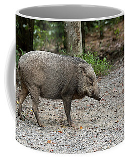 Wild Boar At Pulau Ubin Island Coffee Mug