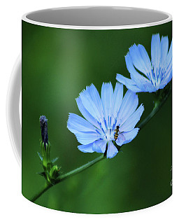 Wild Chicory Coffee Mug
