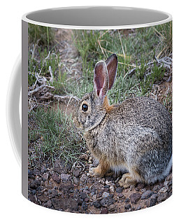 Wild Colorado Cottontail In The Brush Coffee Mug