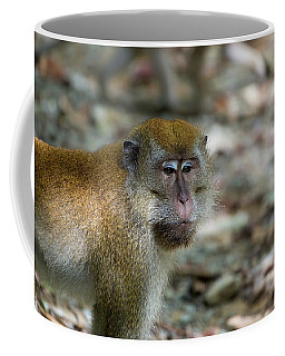 Wild Monkey At Pulau Ubin Island Coffee Mug