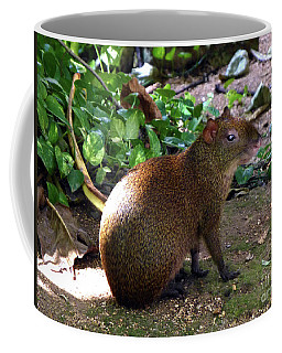 Wild Rodent  Coffee Mug