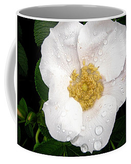 Coffee Mug featuring the photograph Wild Rose by Stephanie Moore