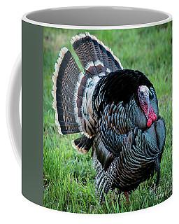 Wild Turkey - Capitol Reef National Park - Utah Coffee Mug by Gary Whitton
