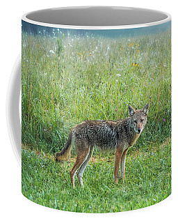 Coffee Mug featuring the photograph Wiley by Jessica Brawley