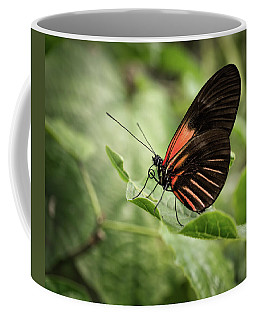 Wings Of The Tropics Butterfly Coffee Mug
