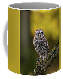 Winking Little Owl Coffee Mug