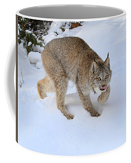 Coffee Mug featuring the photograph Winter Forage by Steve McKinzie