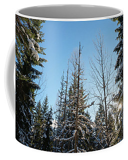 Winter Morning In The Forest Coffee Mug