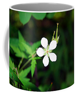 Winter Park White Coffee Mug