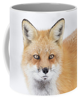 Coffee Mug featuring the photograph Winter Portrait by Mircea Costina Photography