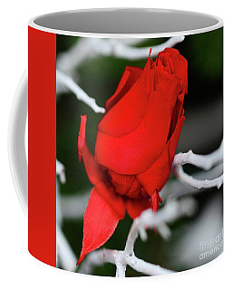 Coffee Mug featuring the photograph Winter Rose by Cindy Manero