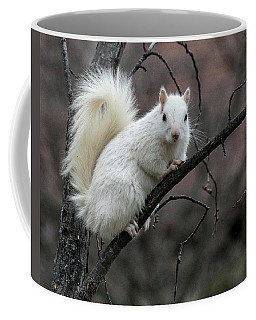 Winter Squirrel Coffee Mug