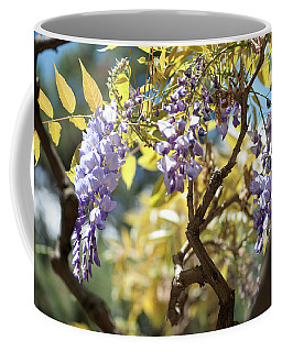 Coffee Mug featuring the photograph Wisteria Branches by Jenny Rainbow