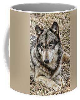 Coffee Mug featuring the photograph Wolf Portrait by Shari Jardina