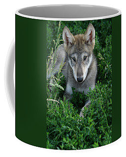Coffee Mug featuring the photograph Wolf Pup Portrait by Shari Jardina